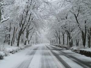 雪② (2)